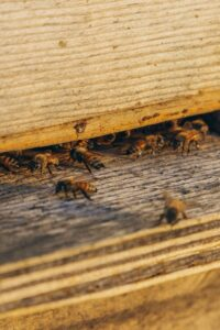 organic bee products